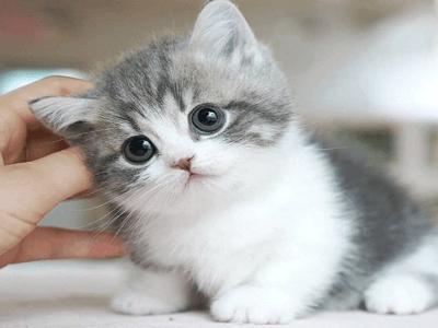 고양이꿈 고양이 꿈해몽 14가지 살펴보고 참고하기