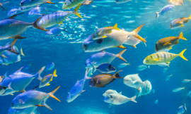 물고기 잡는 꿈 물고기 꿈 해몽 17가지 찾아보기
