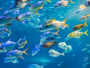 물고기 잡는 꿈