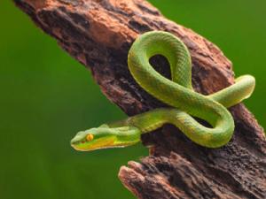 뱀 꿈해몽