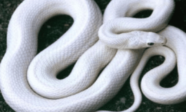 뱀꿈 뱀 꿈해몽 18가지 정리