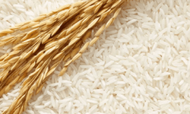 쌀꿈 쌀 꿈해몽 16가지 암시가 무엇인지 궁금하다면