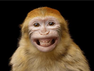 원숭이꿈 원숭이 꿈해몽 16가지 의미는 무엇일까