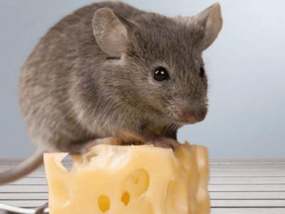 쥐꿈 쥐 꿈해몽 16가지 살펴보고 참고하기